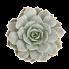 echeveria-fleur-blanc